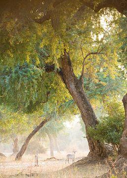 Wasserbock von Loulou Beavers