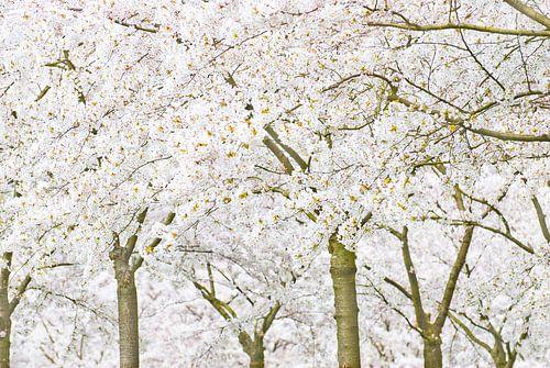 SakuraTrees van