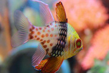 Vis von Stefanie van der Meer