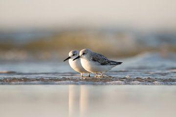 Liefde op het strand van Gerrit Last