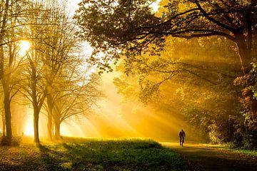 Herbst im Amsterdamer Wald von Jelmer Jeuring
