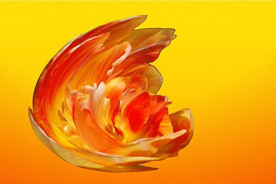 Geel Oranje Vuur Explosie 2 Gedetailleerd