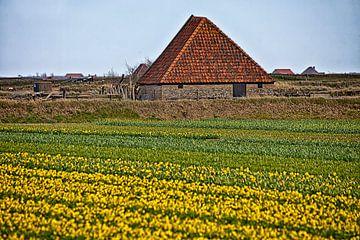 Narcissenveld van Johan Habing