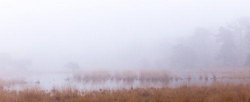 Rust in het oneindige, Strijbeek, Strijbeekse heide, Noord-Brabant, Holland, Nederland afbeelding mi van