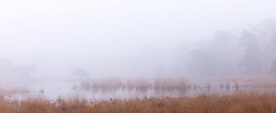 Rust in het oneindige, Strijbeek, Strijbeekse heide, Noord-Brabant, Holland, Nederland afbeelding mi