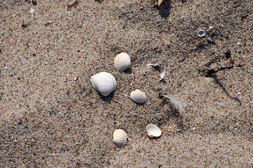 Muscheln am Strand von GH Foto & Artdesign