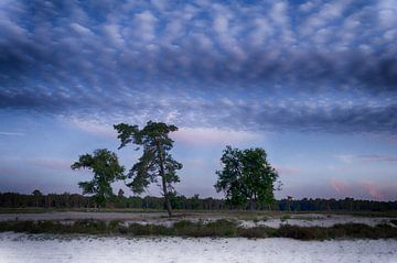 Nationaal Park Loonse en Drunense duinen van Mark Bolijn