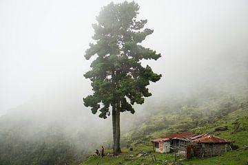 Ein großer einsamer Baum steht im Nebel an einem Berghang. von Twan Bankers