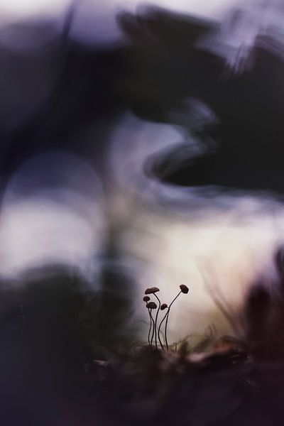 The calm repose of autumn days van Bob Daalder