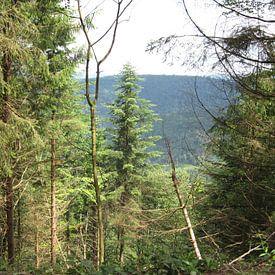 Bos  diepte uitzicht vanuit het bos van Sander van der Lem