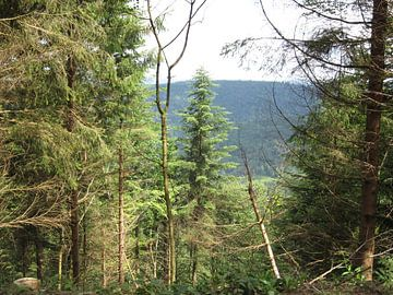 Bos  diepte uitzicht vanuit het bos von Sander van der Lem