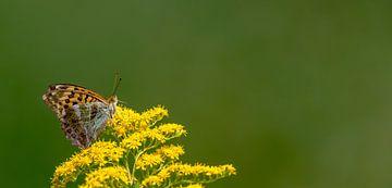 Vlinder op gele bloesem van Hans-Jürgen Janda