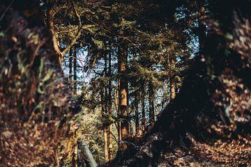 Abstract Natuur fotografie Bos via reflectie herfsttinten van Maarten Mooijman