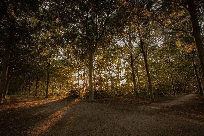 zonsondergang in het bos van Evert Jan Heijnen