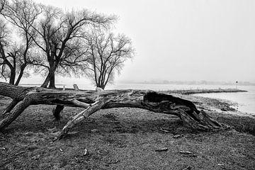 Landschap met mist en oude boom in Werkendam von Rob van der Teen