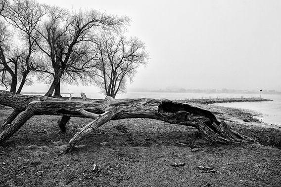 Landschap met mist en oude boom in Werkendam
