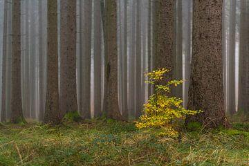 Kleur in het mistige bos van Denis Feiner