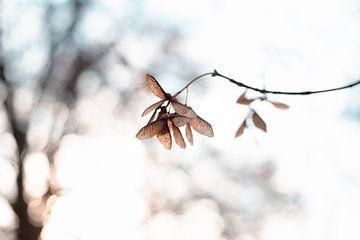winters beeld van Kristof Ven