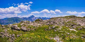 Bergblumen (Arnika montana) von Walter G. Allgöwer