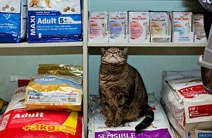 Kat in dierenwinkel