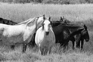 Witte paarden zwarte paarden van Jolanda van Eek