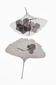 Botanical # 35., Lenka von 1x