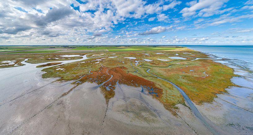 Texel - Le rauque - Red Marsh samphire 07 sur Texel360Fotografie Richard Heerschap