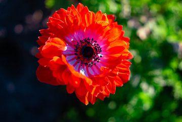 Lente bloem van Bart cocquart