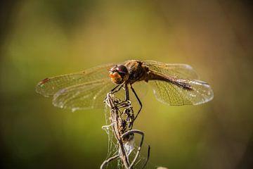 Libelle von Sylvia Schuur