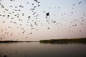 Zonsondergang vanaf een boot. Silhouetteof vogels Okavango Delta, Botswana Afrika van Tjeerd Kruse