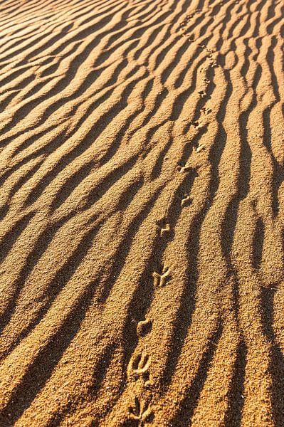Sporen in het zand van Wouter van Woensel