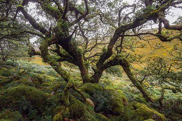 L'odeur de la terre et de la vieillesse sur Joris Pannemans - Loris Photography