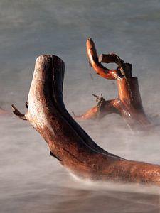 Baumstämme im Wasser