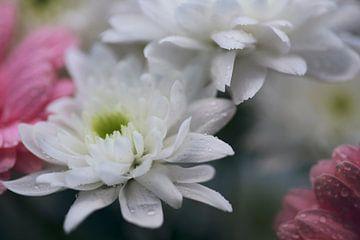 Blumen nach Regen von Monique de Koning