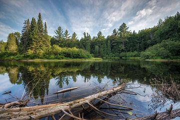 Quebec Forest von Frederik van der Veer