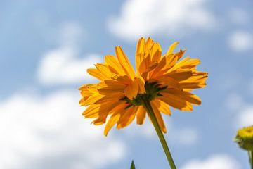 Gele bloem van Kees Korbee