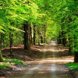 Bosgebied de Vrijenberg van Dennis van de Water