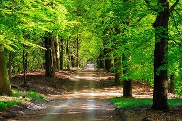 Bosgebied de Vrijenberg von Dennis van de Water