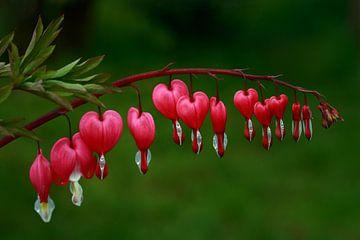 flower power - coeurs brisés sur lieve maréchal