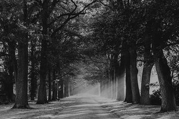 Morgendlicher Sonnenschein-Spaziergang durch den Weldam bei Diepenheim von Holly Klein Oonk