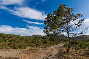 Boom op Ibiza van RH Fotografie