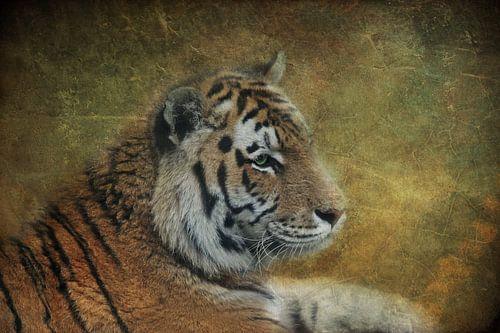 Tiger Lilly van