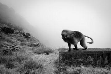 Gelada aap in Ethiopische hooggebergte van Arno Maetens