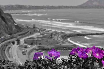 Lila Blumen an der Küste von Lima, Peru von Ramon Van Gelder