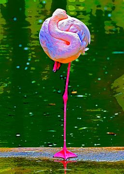 Pink flamingo van Leopold Brix