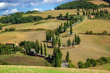 Allee mit Zypressen in der Toskana, Italien von Discover Dutch Nature