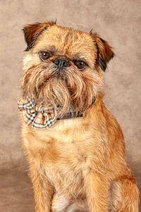 funkelnder Hund von Tony Wuite