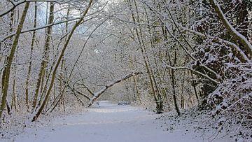 Pad door een besneeuwd winterbos van