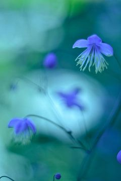 Bloemen sprookje vintage blauw von Sascha van Dam