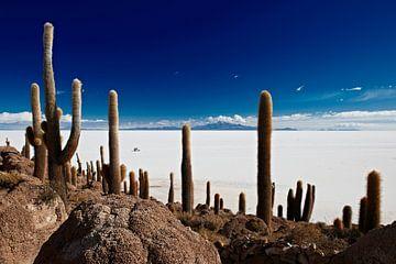 gigantic cacti at Salar de Uyuni van Jürgen Ritterbach